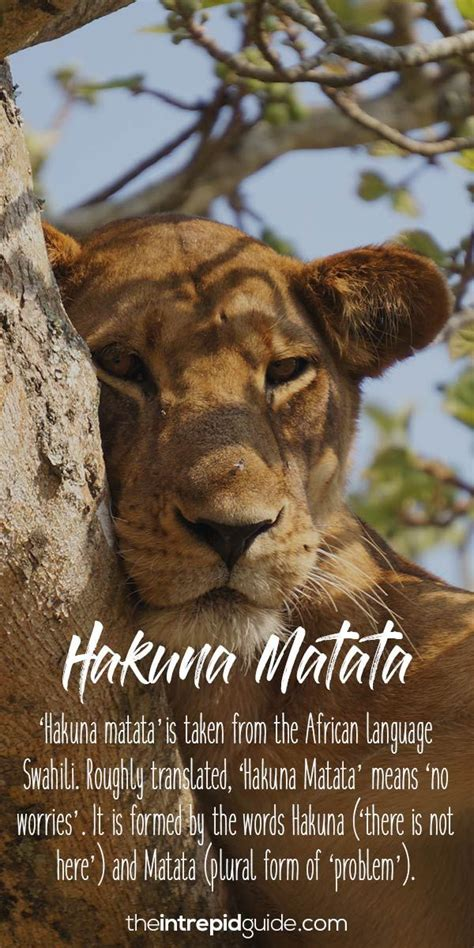 20 Beautiful African Words in  The Lion King  That ll Make ...