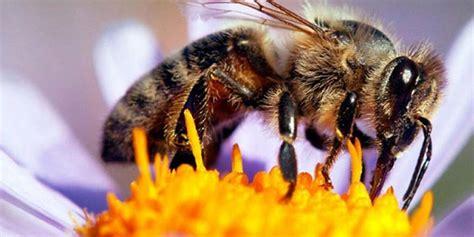 20 de mayo: Día Mundial de las abejas, ¿por qué se celebra ...