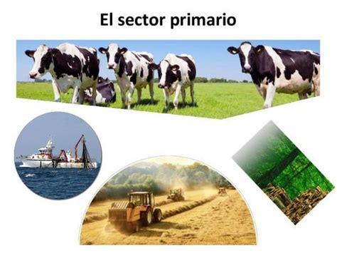 20 empresas colombianas del sector primario   Brainly.lat