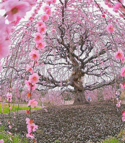 20+ Fotos de los árboles más hermosos de todo el mundo ...