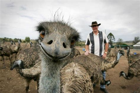 20 Hilarious Animal Photobombs That Will Crack You Up