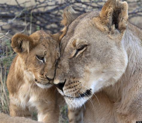 20 Imágenes de animales demostrando su amor   Fress   Fress