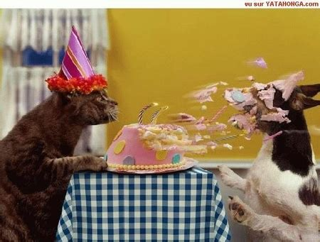 20 Most Funny Birthday Pictures