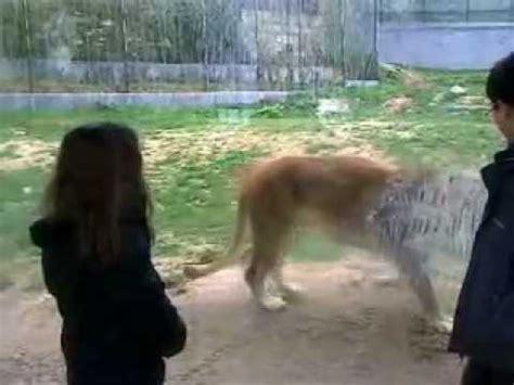 2012   30 de Dezembro   Zoo da Maia   YouTube