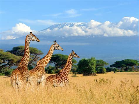 2020 Kenya Travel Guide   Matador