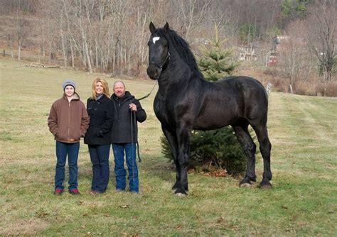 21 De los animales más grandes del mundo y especie