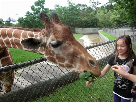 23 best 43 Things To Do at Your Zoo images on Pinterest ...
