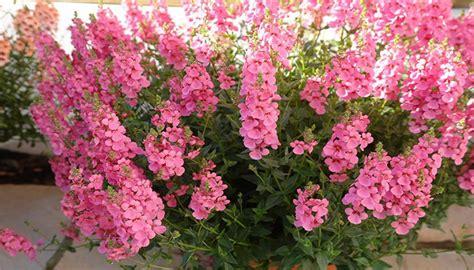 24 Plantas De Sol Muy Resistentes, Ideales Para Terrazas Y ...