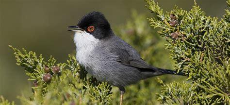 25 años siguiendo a las aves comunes de España   SEO/BirdLife