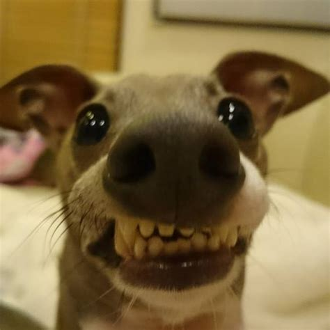 25 fotos de perros que te harán reír