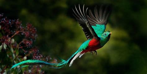 25 Incredible Exotic Birds That Will Blow Your Mind