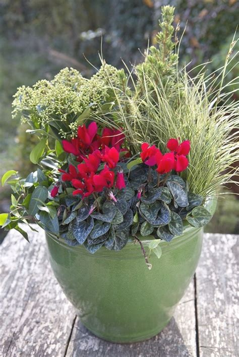 25 Photo of Winter Outdoor Potted Plants