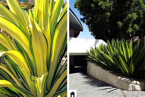 25 plantas resistentes ao sol • Casa de Irene
