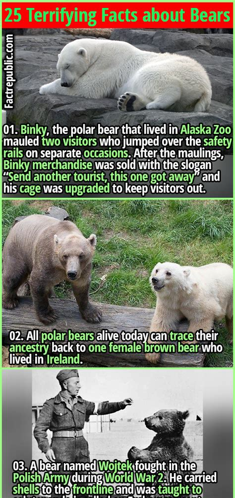 25 Terrifying Facts about Bears   Fact Republic