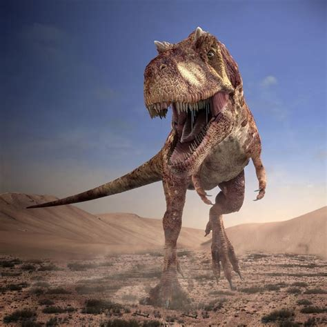 28 best images about DINOSAURES P5 on Pinterest | More ...