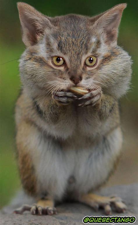 28 Interesting Animal Species Created Using Photoshop ...