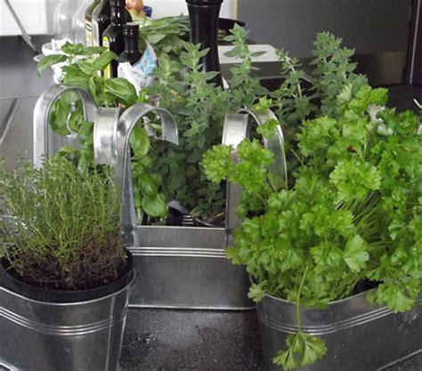 28 plantas medicinales y aromáticas que puedes cultivar en ...
