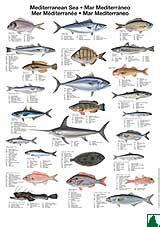 2pcpi Pesca: imagenes de especies en el mediterraneo