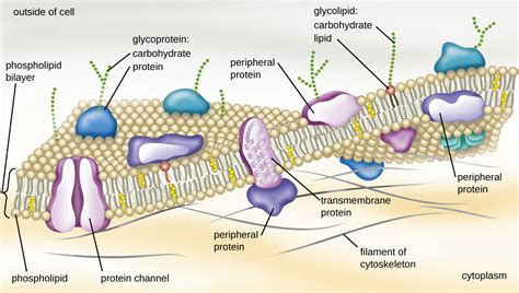 3.3: Unique Characteristics of Prokaryotic Cells   Biology ...