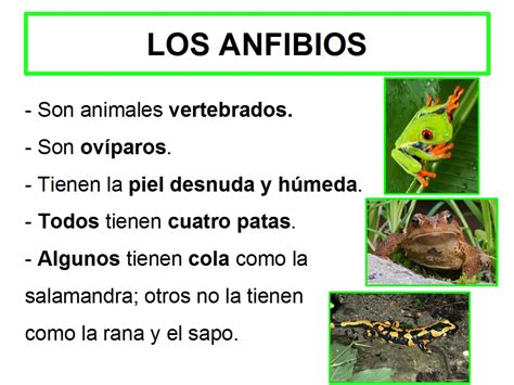 3 anfibios y sus caracteristicas   Imagui