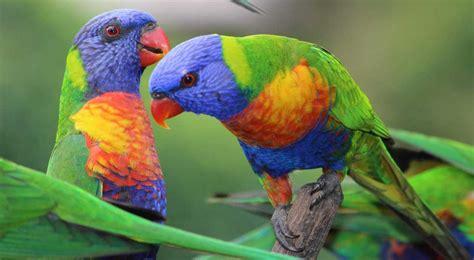 3 cuidados básicos de un pájaro.   Estrellas.com.es