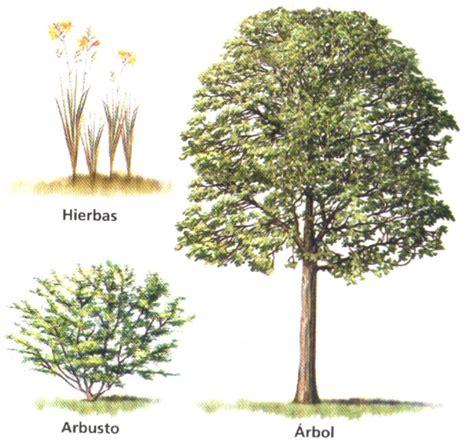 3 Ejemplos De Hierbas Arbustos Y Arboles   Colección de ...