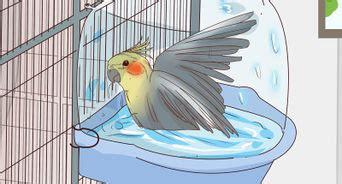 3 formas de atraer a las aves   wikiHow