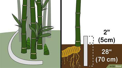 3 Formas de Matar Bambu   wikiHow