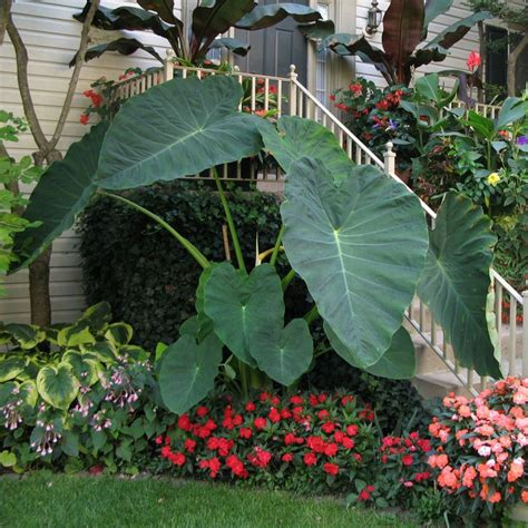 3 Tips for Shade Perennials | Shade plants, Tropical ...