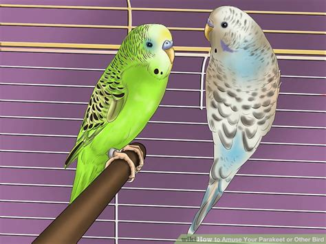 3 Ways to Amuse Your Parakeet or Other Bird   wikiHow