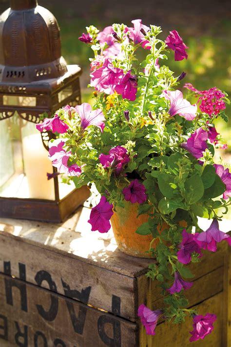 30 plantas de exterior resistentes al sol y al calor