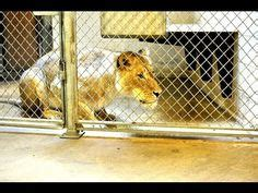 31 Best Zookeeper images   Zoo keeper, Activities for ...