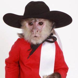 35 best Trained Monkeys images on Pinterest | Monkeys ...