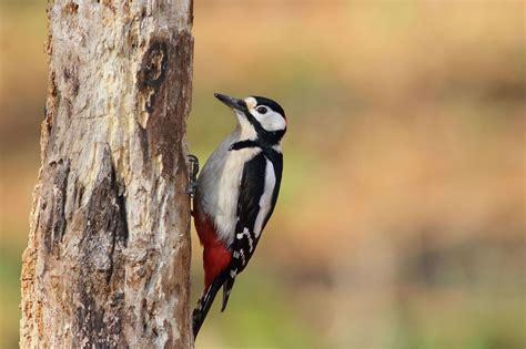 353 Fotos de Pájaros