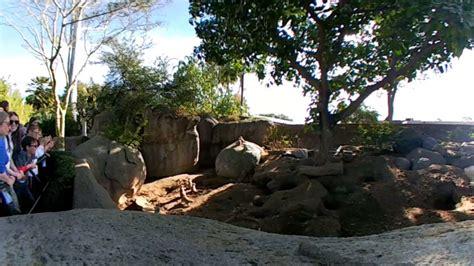 360 Video  San Diego Zoo Meerkat Exhibit   YouTube