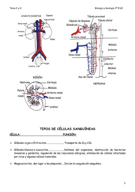 3o eso biologia y geologia apuntes[1]