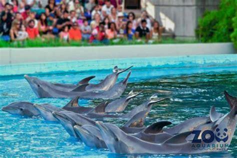 3x2 Visita el Zoo Aquarium de Madrid ¡Un día salvajemente ...