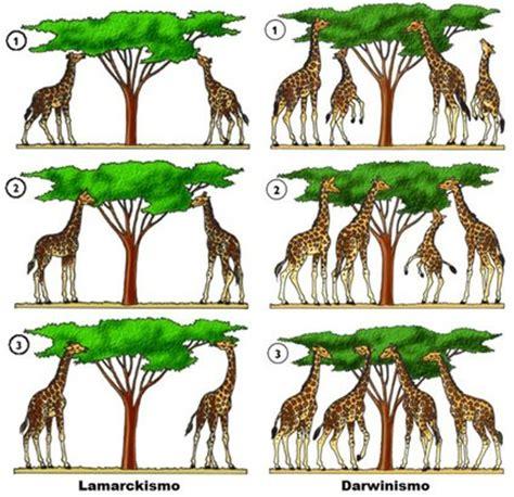 4.1 Teorías de la evolución   Biología II