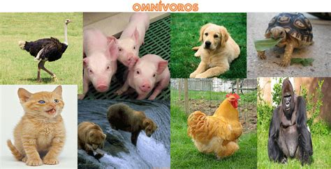 4.como se alimentan « WORLD FAMILY ANIMAL