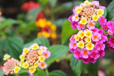 4 plantes d'exterior per comprar aquest estiu. | Garden ...