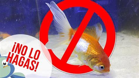 4 RAZONES para NO mezclar peces de agua FRÍA con peces ...