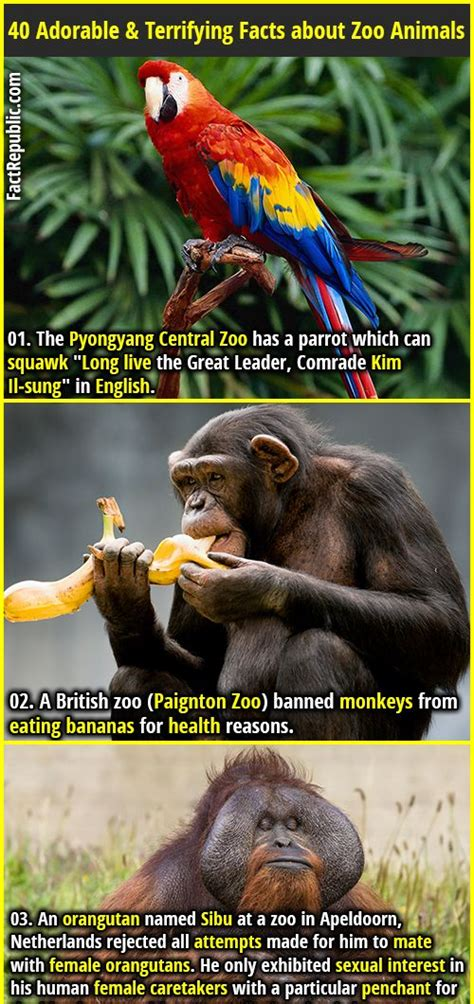 40 Adorable & Terrifying Facts about Zoo Animals   Did I ...