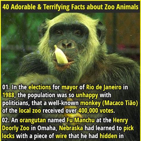 40 Adorable & Terrifying Facts about Zoo Animals ...