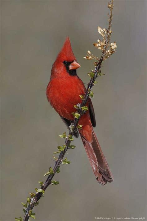 40 best Birds of Western North Carolina images on Pinterest