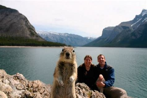 40 Most Hilarious Animal Photobombs Ever! #14 Is A Really ...