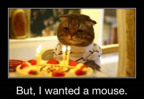 42 Best Funny Birthday Pictures & Images   My Happy ...