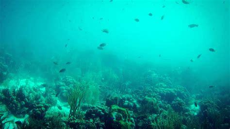 #4205, Buceando en arrecife peces nadando fondo mar oscuro ...