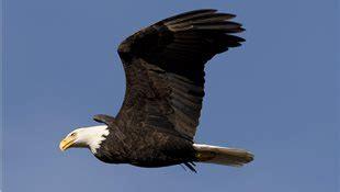 433 Fotos de Aves