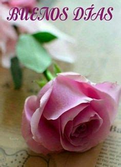 44 mejores imágenes de Buenos días con rosas   Buenos dias ...