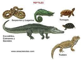 46 best images about REPTILES on Pinterest   Madagascar ...